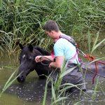 Paard te water Houtrakkerweg © George Bakker / VRK